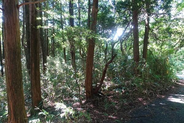 土地は、現在山林です。伐採、伐根、地盤調査、地盤改良等、経過を楽しんでください。