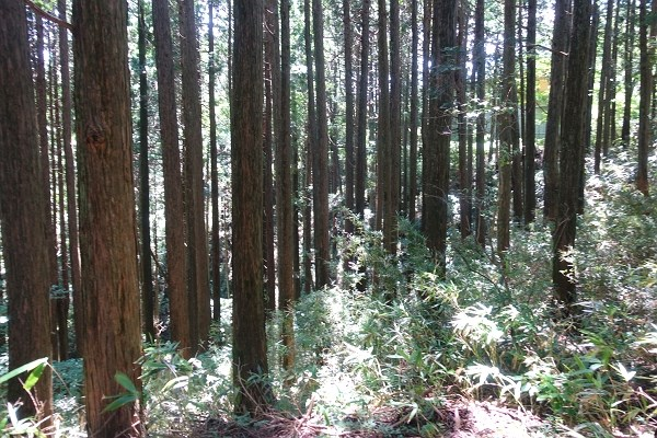 木々の伐採は、建築プランができてから環境省、箱根町との打ち合わせが必要です。