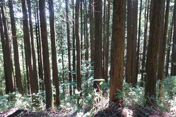 斜面地の処理についても、箱根町、神奈川県、環境省との打ち合わせをすることになります。