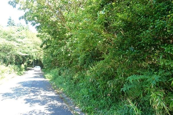 針葉樹のみでなく、多様な植生のエリアです。