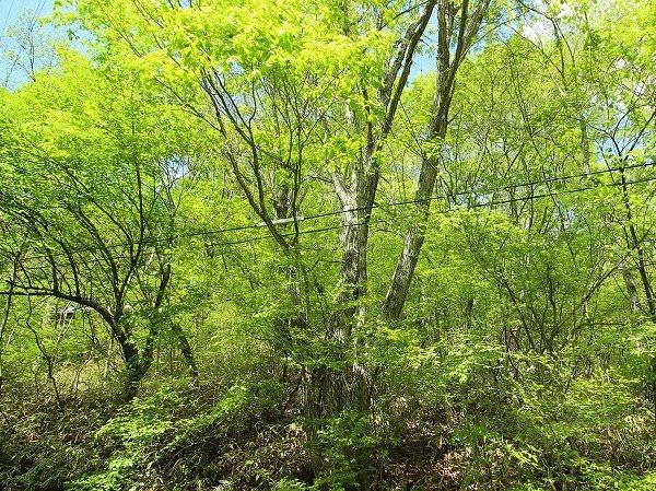 木々の中には土地のランドマークと成る様な立派な樹木も自生しており四季折々の姿を見せてくれるでしょう。