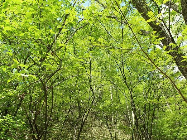木々が暑い日差しを遮り涼しい軽井沢ライフを満喫できます。
